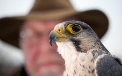 falcon-master