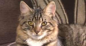 mittens-gatto-ermafrodito