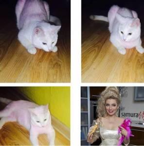 gatto-lenina1
