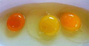 uova-colore-tuorlo
