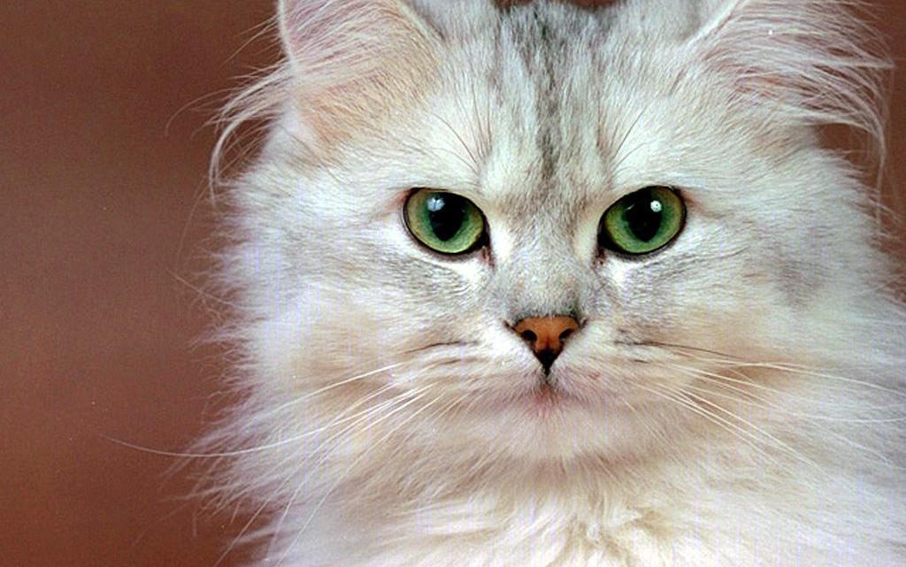 gatto10